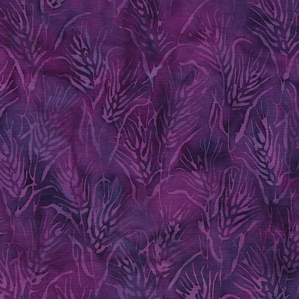 Tonal purple wheat