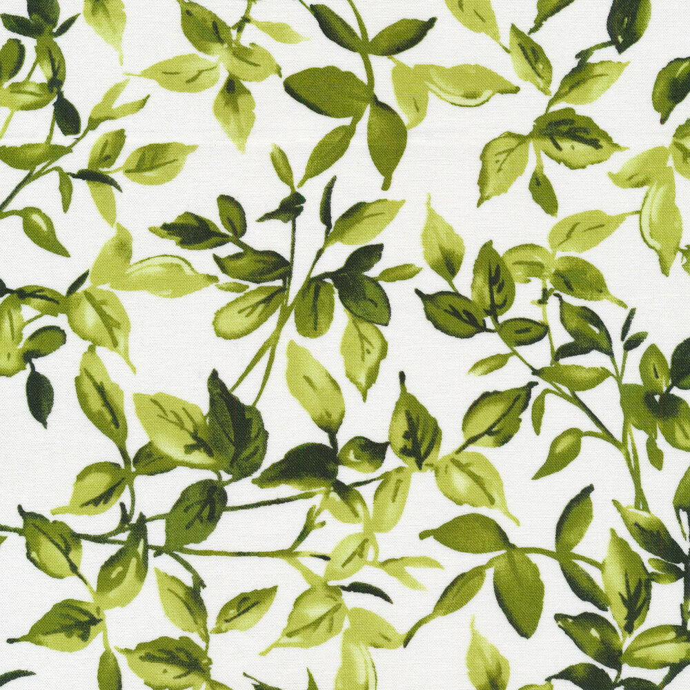 Dark green leaves and vines on a white background
