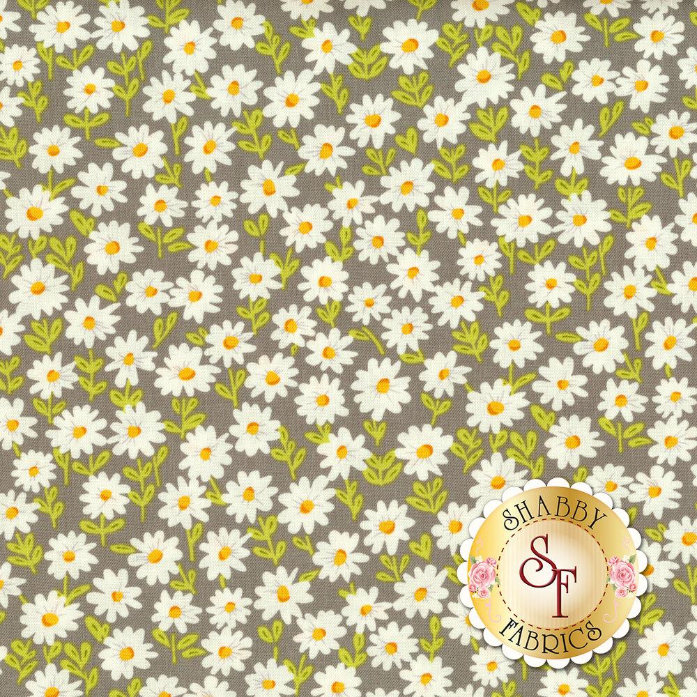 Small white daisies all over grey | Shabby Fabrics