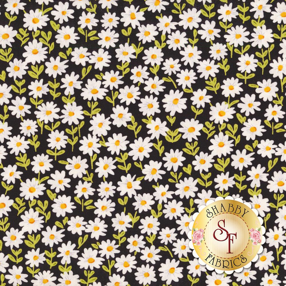 Small white daisies all over black | Shabby Fabrics