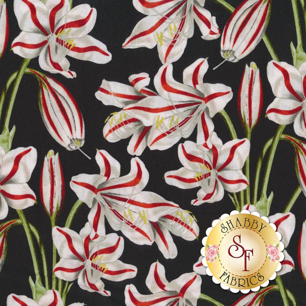 Red and white amaryllises on black | Shabby Fabrics